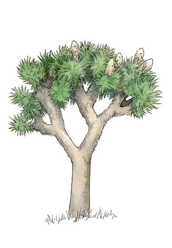 lucy conklin illustration spot illustrations