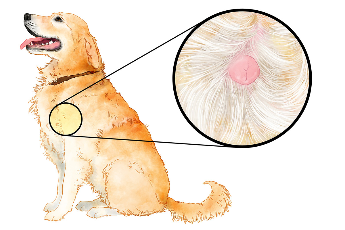 mast cell tumor in dogs illustration